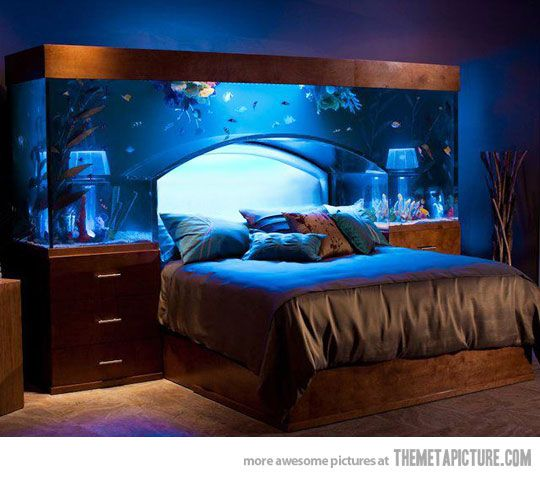 Aquarium Bed - I would turn the light off at night.
