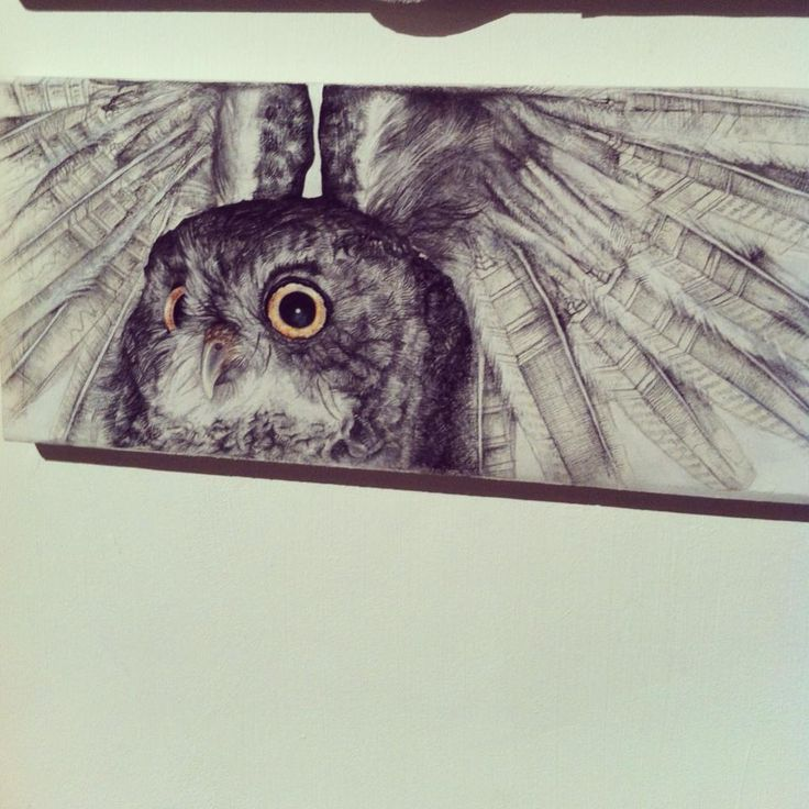 An owl that my twin sister and I did for an art gallery in Durban - it was a community-based competition. Chalk pastel and pencil.