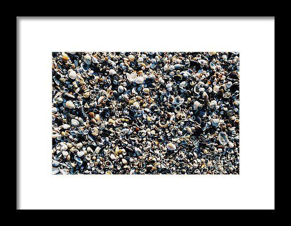 Sea Shells On Beach Sand Framed Print
