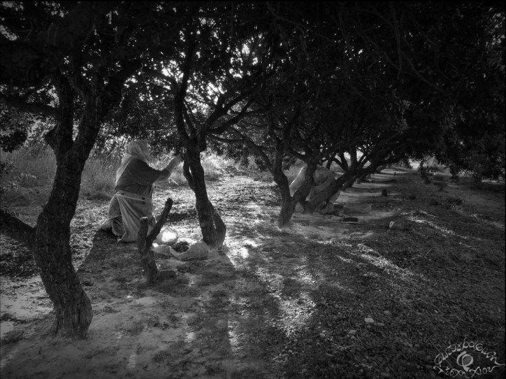 Γιούλη Τελλή - Καμπά: Μαστίχα - Απλωταριά