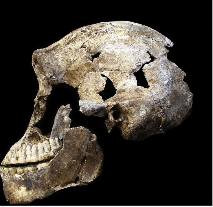 Находка в Африке оказалась бомбой, заложенной под теорию эволюции