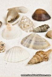 KIS tengeri kagyló kevert természetes PKG / 1LB