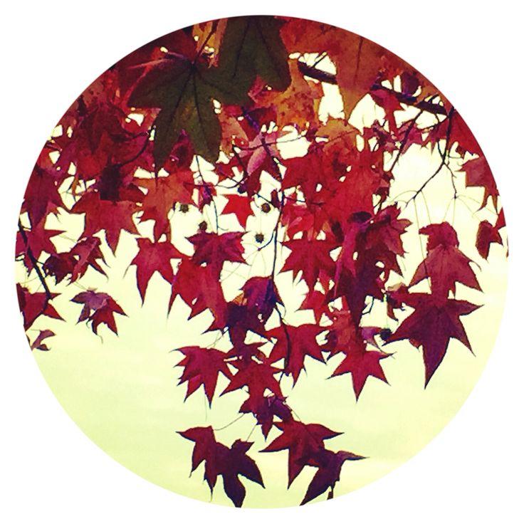 Autumn leaves |  By Josie Attley 2016
