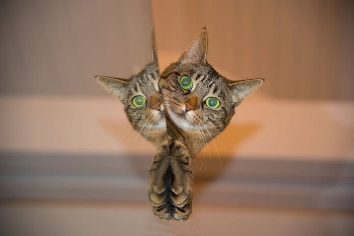 1001 Lustige Katzenbilder Und Katzenspruche Lustige Katzenbi