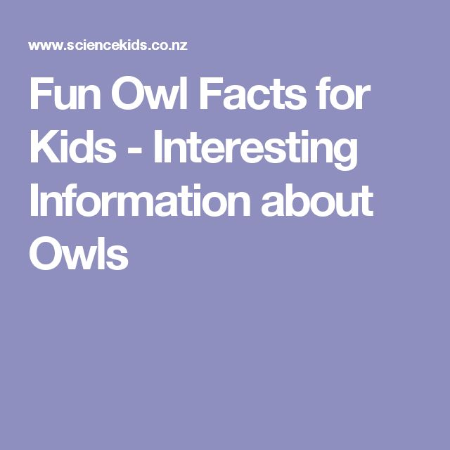 Fun Owl Facts for Kids - Interesting Information about Owls