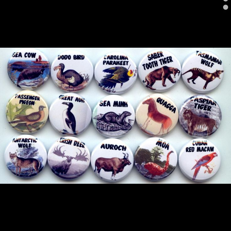 Extinct Animals and Birds pinback button set by Yesware11 on Etsy.. Click for details!