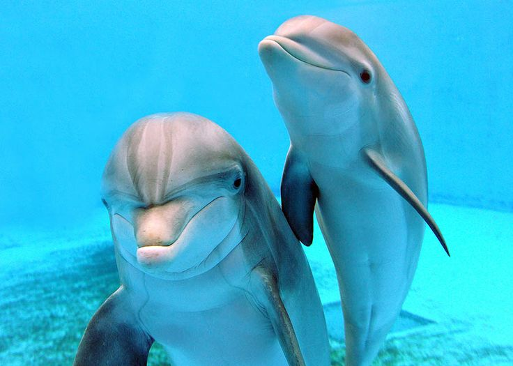 Dolphin Fun Fact: Did you know that bottlenose dolphins ...