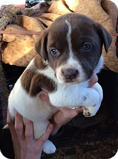 ADOPTED! Meet Kenzi a lab mix Puppy for Adoption at East Lake Pet Orphanage (ELPO).
