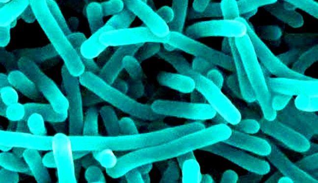 Firmicutes | Every Bacteria has a Story | Gut Health ...