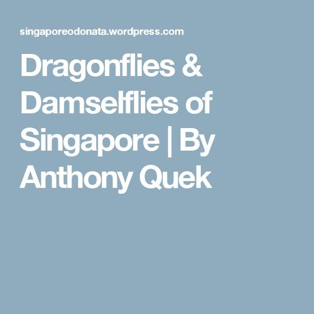 Dragonflies & Damselflies of Singapore | By Anthony Quek