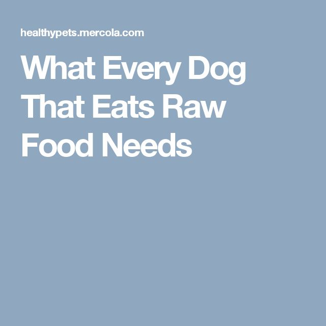 What Every Dog That Eats Raw Food Needs