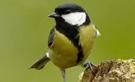 beleef de lente..... live meekijken in nestkasten van een aantal vogels