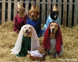 xmas puppies | Christmas Dog