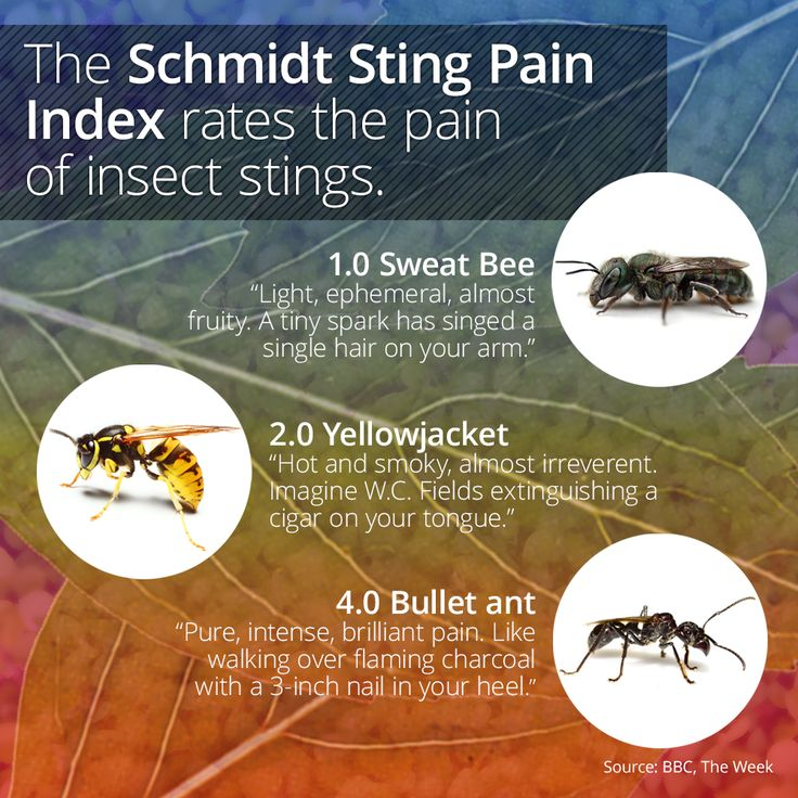 The Schmidt Sting Pain Index