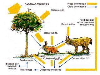Resultado de imagen para LA FOTOSINTESIS Y EL FLUJO DE ENERGIA