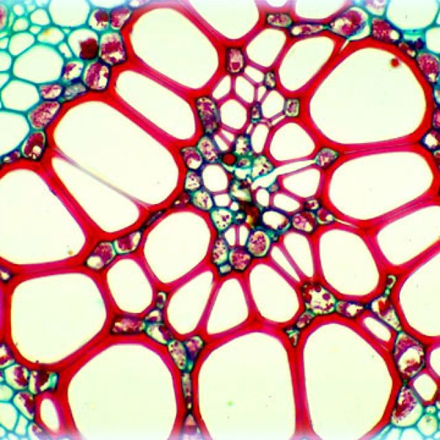 Nature up close. Cell cross-section under a microscope