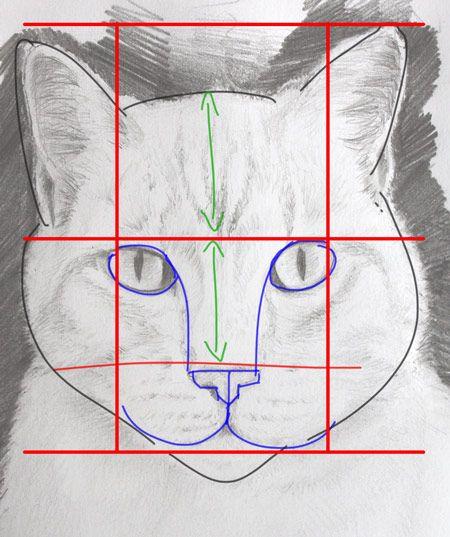 dessiner un portrait de chat simplement