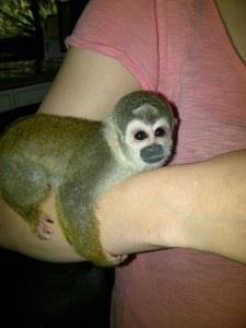 Baby Squirrel Monkey!