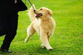 When we think of dog training we must remember it comprises of important subcategory terms these taking a leading role. The main term being dog obedience training is essential for grounding in dog training classes including dog training equipment and dog training products. Dog training collars, dog crate training and dog training tips with the dog training clicker is essential for happy dog. DogSiteWorld Store - http://DogSiteWorld.com