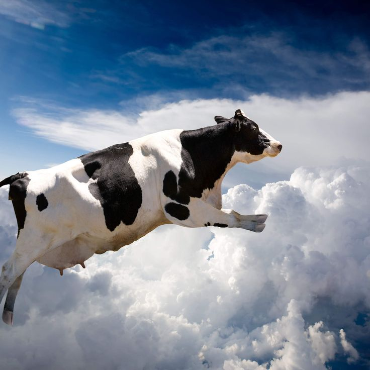 400 Flying Cows Cause Plane To Make An Emergency Landing