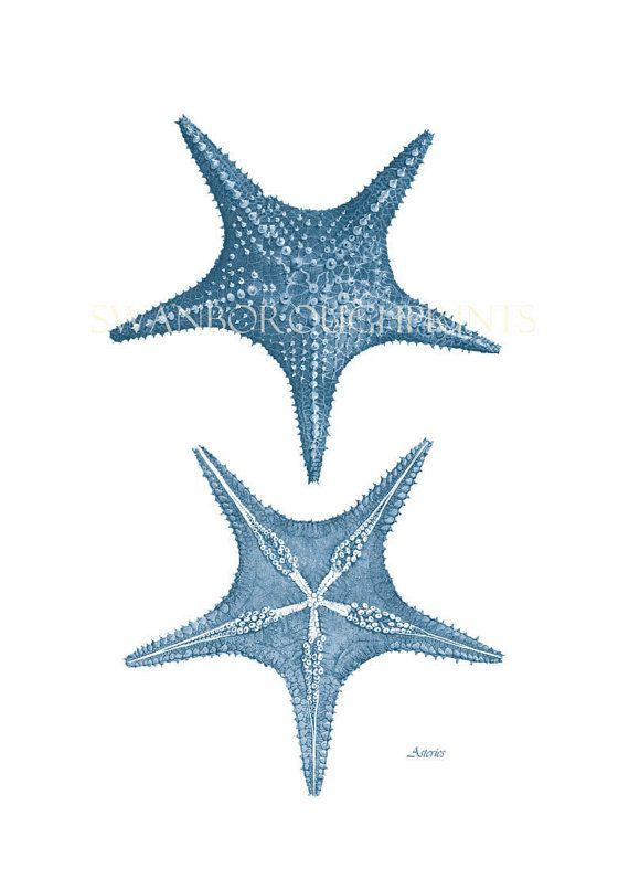 Blue Starfish Print Nautical Home Decor Sealife Art Wedgwood Blue Beach Style Wall Art Decor Sealife illustration Noahs Nautical Prints