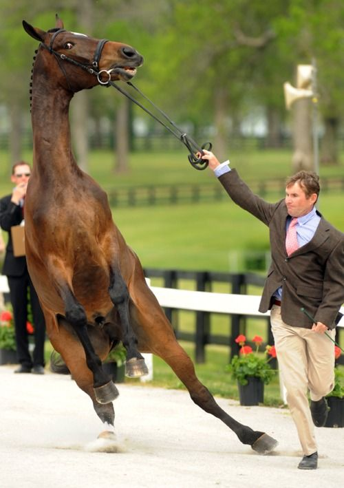 oh... the jogs.....Guys Face, Lol Memes, Funny Horses Things, Horses Jumping Backgrounds, Cute Animals, Dressage Horses, So Funny, Dance, Equestrian