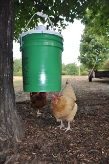 DIY: Chicken Waterer -- Perfect for keeping the drinking water free of debris, dirt, & poop!!