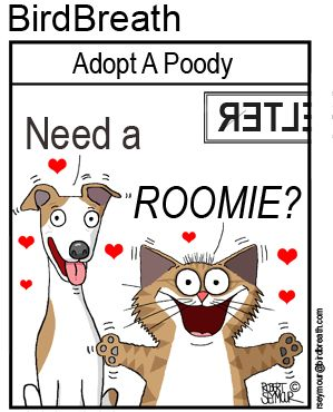 Need A Roomie? #cat #dog #cartoon #adoptdontshop