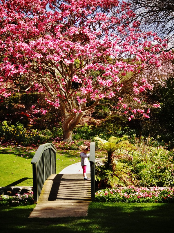 Spring time-Washbourn Gardens, Richmond, Nelson, New Zealand
