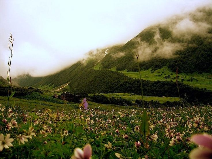 Valley of Flowers, declared UNESCO World Heritage Site - Location: Garhwal Himalayas (Uttaranchal),Area: 87.5 sq. Kms, Altitude: Between 3,658m to 3,962 m, Best Season to go: Mid July To Mid September