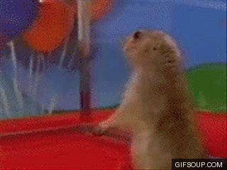 No gif: um hamster virando com cara assustada, a câmera vai dando zoom no rosto dele