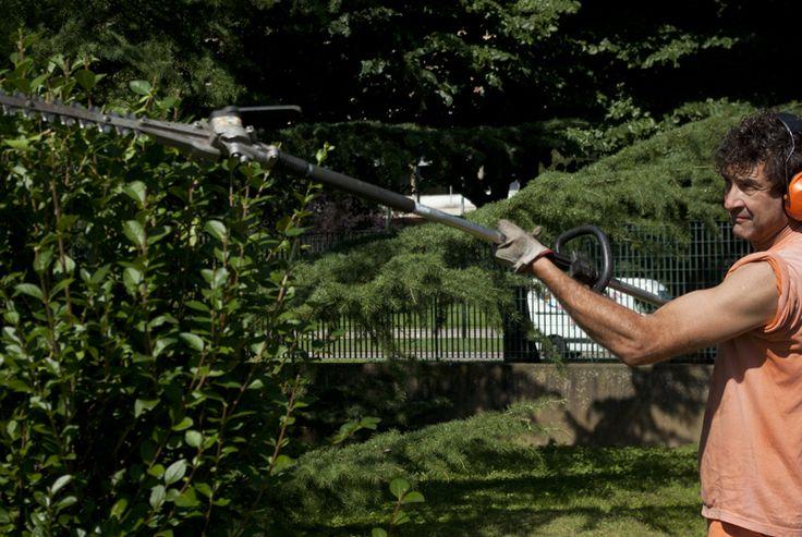 Manutenzione e potature arbusti e siepi www.coopagridea.org
