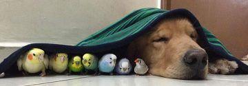 Ein Mann erstellt eine schöne Fotoreportage von seinem Hund, Vögel und Hamster! Foto 6 ist so süß!