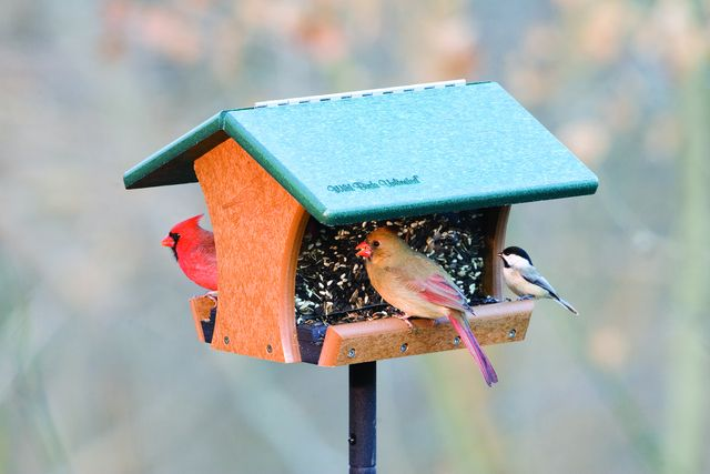 the right food for the right birds: Birdhouses, Birds Unlimited, Birds Feeders, Birds Houses, Google Search, Houses Ideas, Birds Chirp, Wild Birds, Feathers Friends