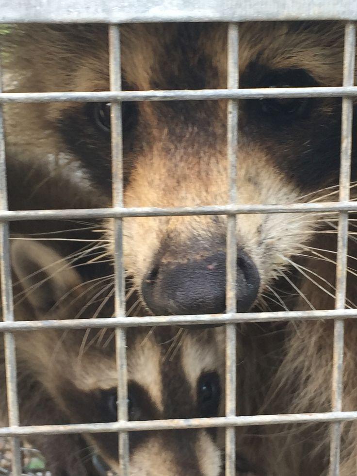 Nuisance Wildlife Control Rhode Island