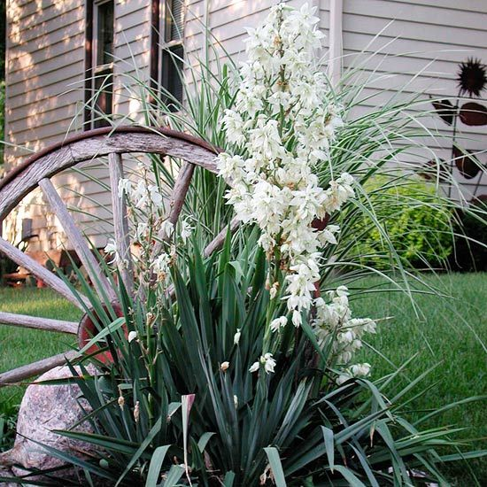 Wheel With Yucca.