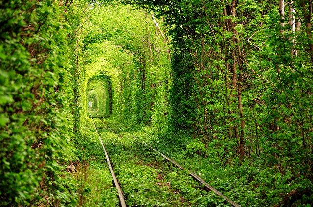 """Eastern Ukraine, """"The Tunnel Of Love,"""" natural tunnel formed over many years by a passing train"""