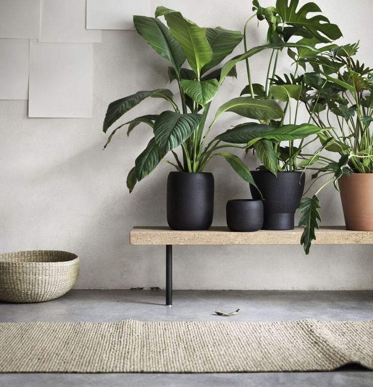plants in black pots