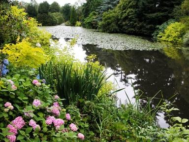 Bog Garden Ireland