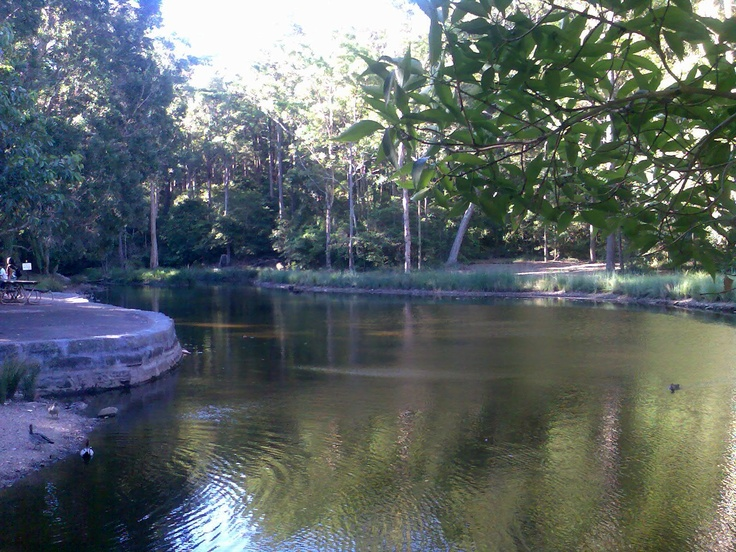 Pond at Blackbutt Reserve Kotara NSW near my new home