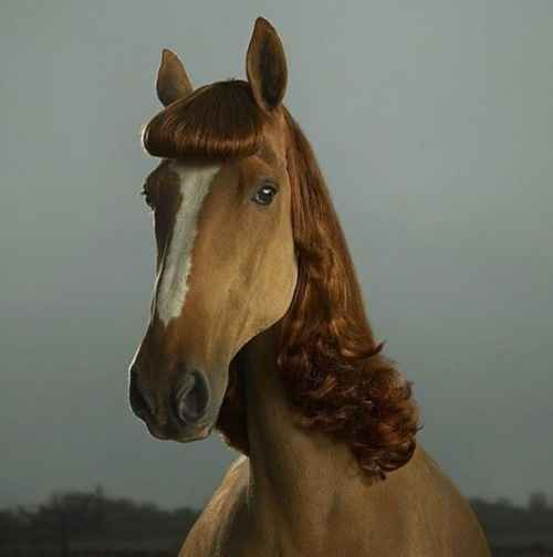 A horse in a wig: