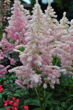 Hometalk :: Great Perennials for Shade (All of Them Deer Resistant)