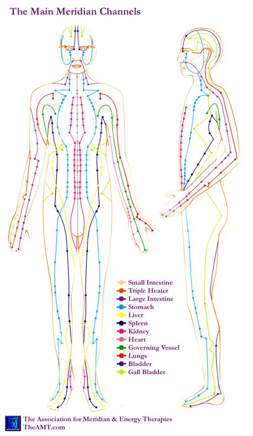Acupuncture Meridian Chart from AMT showing main meridians