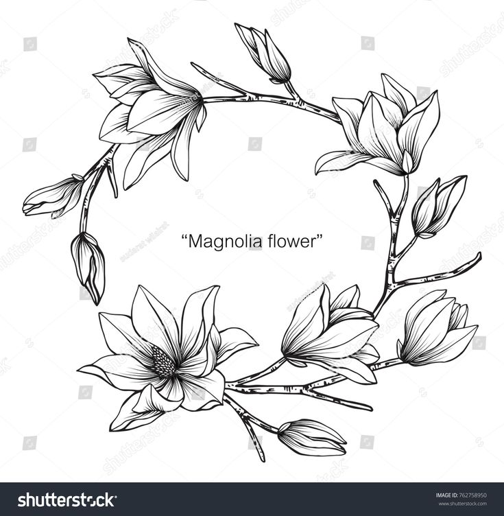 Wreath Magnolia flower drawing and sketch with black and white line-art. – Sue Summer