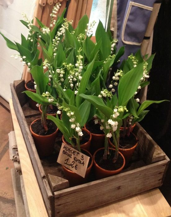 French ~ muget des bois (Lily of the Valley) ~ beautiful idea. I could do this. :)