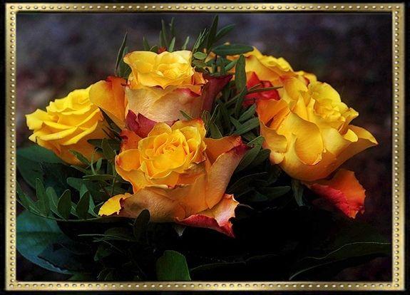 sárga rózsák szerk