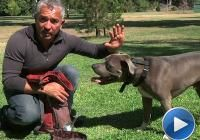 The Importance of Giving Your Dog Affection | Cesar Millan