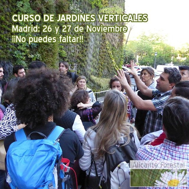 112 best images about jardines verticales on pinterest for Curso jardineria madrid