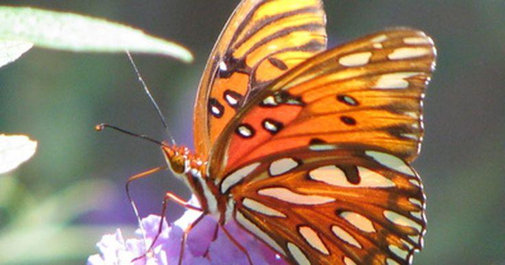 Formas de ayudar al ecosistema. El medio ambiente terrestre está compuesto por complejos ecosistemas constituidos por el conjunto de las relaciones que se establecen entre las plantas, los animales, las personas y el hábitat de una determinada zona. En el concepto de pensar de forma global para actuar de forma local, reside la piedra angular de cuidar del medio ambiente ...