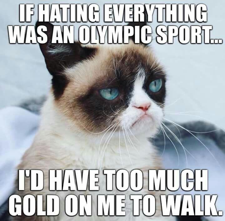 Olympics Of Grumpy Funny Animal Jokes Funny Grumpy Cat Memes Funny Cat Memes
